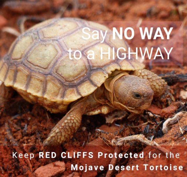 Mojave Desert Tortoise Graphic