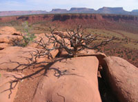 Upper Red Canyon (small)